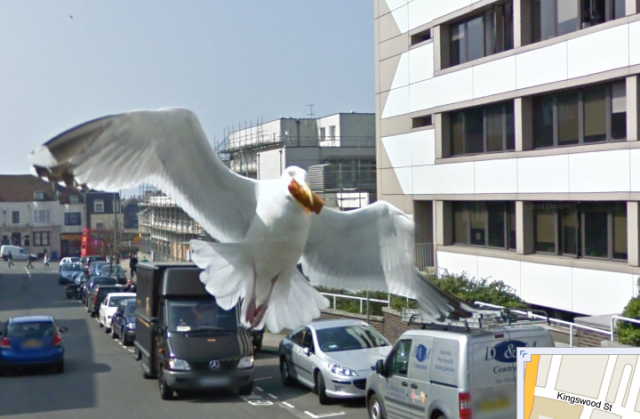 google-maps-street-view-takes-a-great-picture-of-a-bird-1