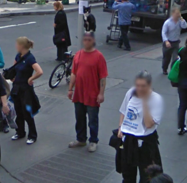 google-street-view-captures-a-new-york-guy-with-a-cat-on-his-head-literally