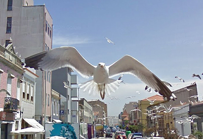 flying-seagulls