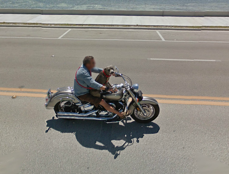 google-street-view-driver-gets-the-evil-eye-from-a-biker-dog--