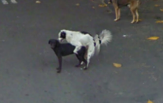 dog-will-be-dogs-even-in-brazil