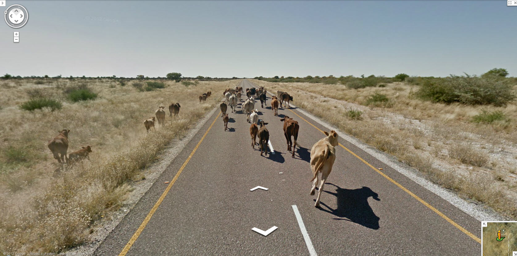 more-roadkill-potential-from-botswana-just-dont-hit-the-one-with-the-horns