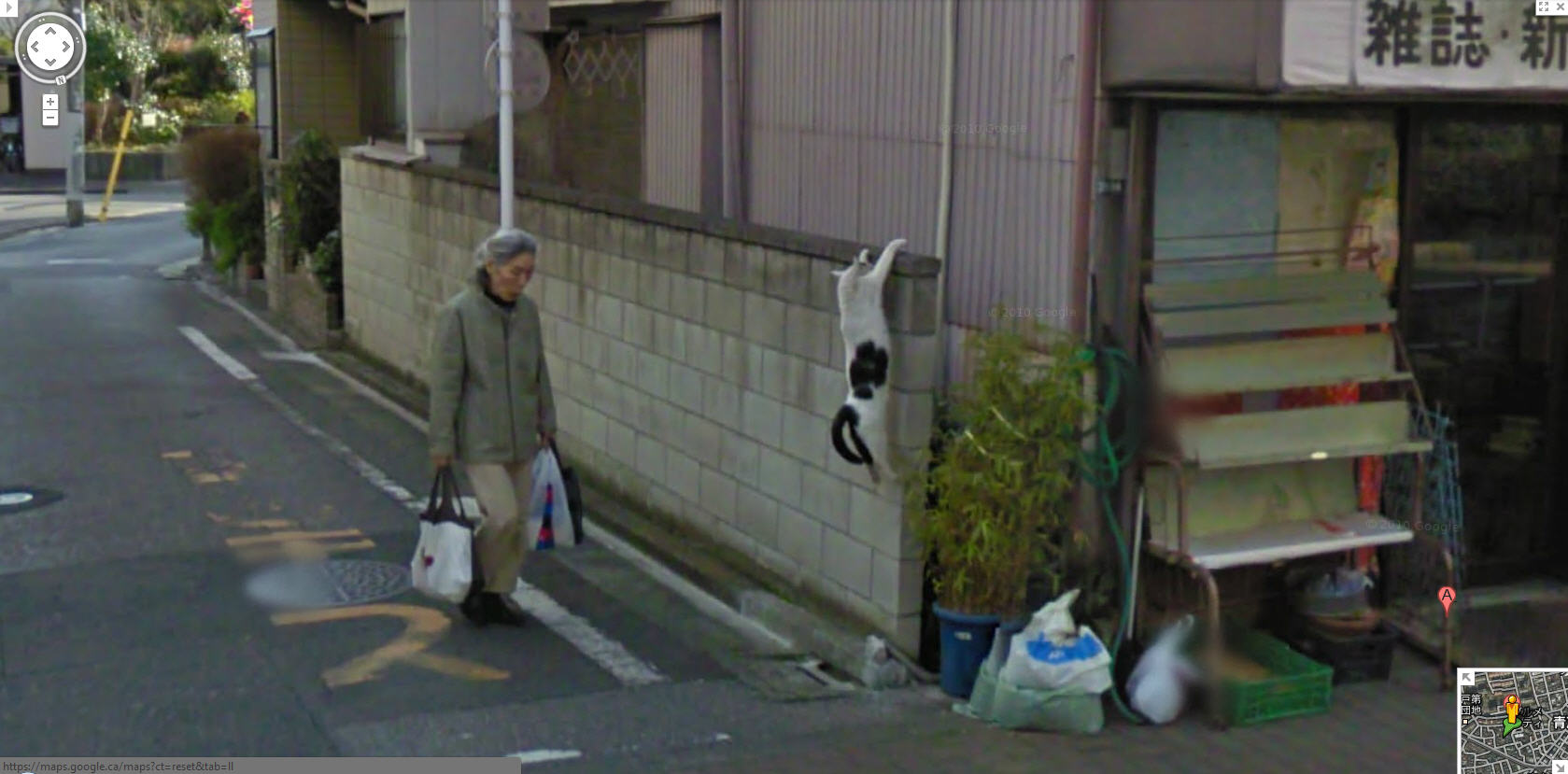 google-street-view-japan-captures-a-cat-climbing-a-wall