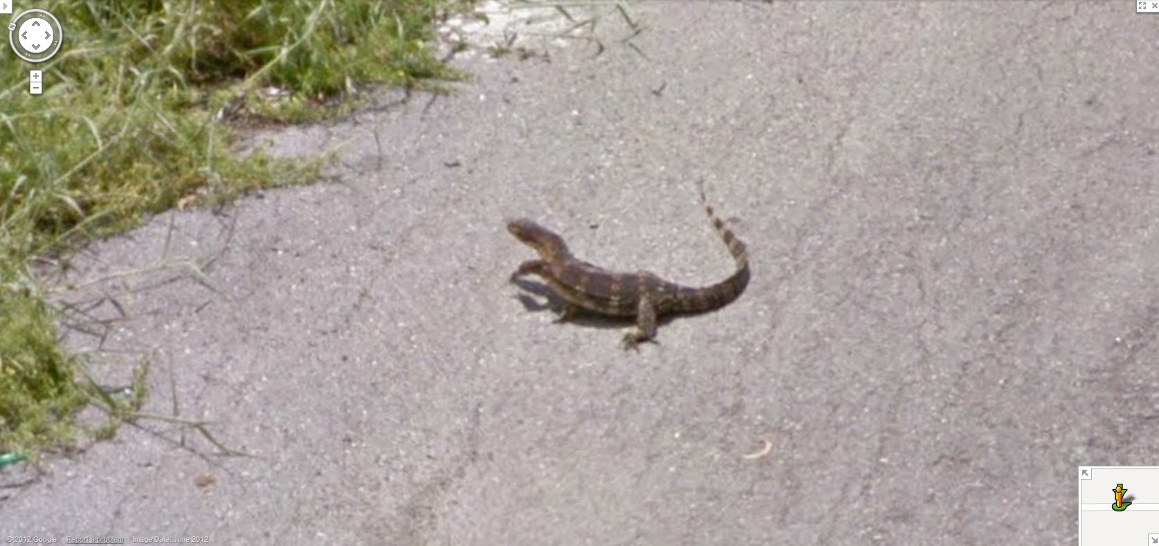 google-street-view-thailand-is-about-to-create-some-roadkill