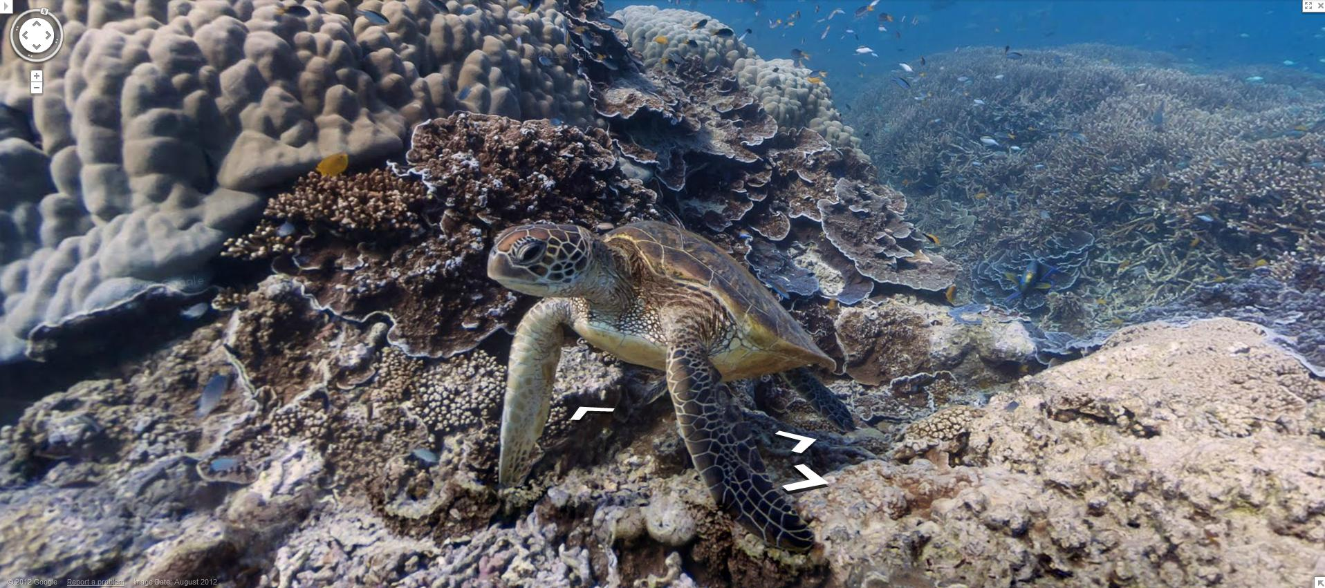 google-maps-street-view-goes-underwater-now-called-google-scuba-view--