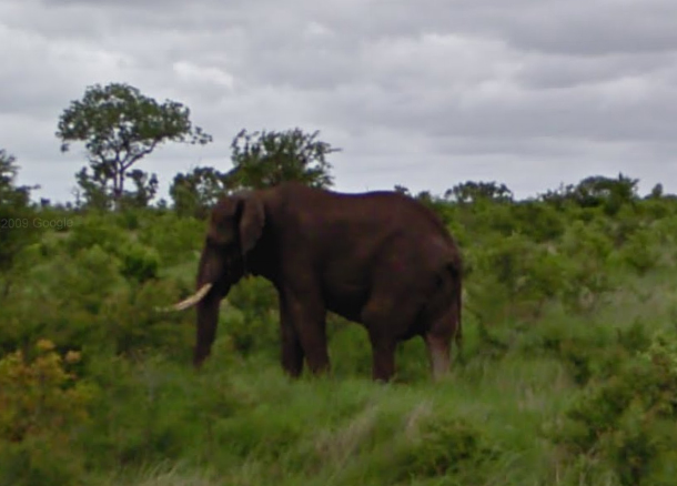 elephant-in-the-park-2