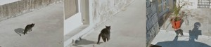 google-street-view-chases-cat