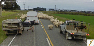 google-street-view-new-zealand-sheep