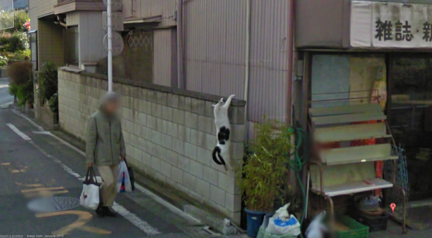 C Mon Cat You Can Make It Google Street View World