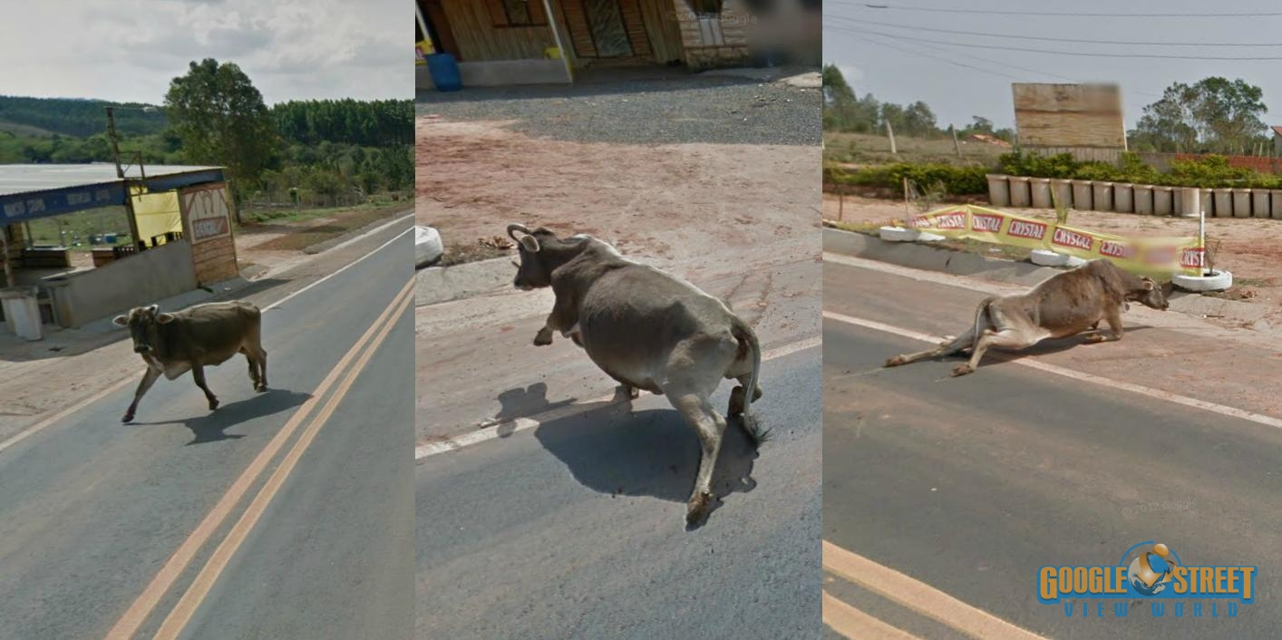 Did Google Street View Run Over a Cow in Mexico?