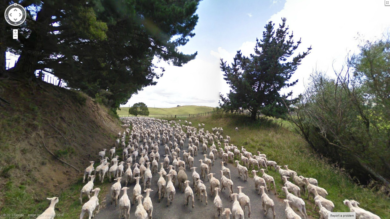 That's a heck of a lot of sheep.