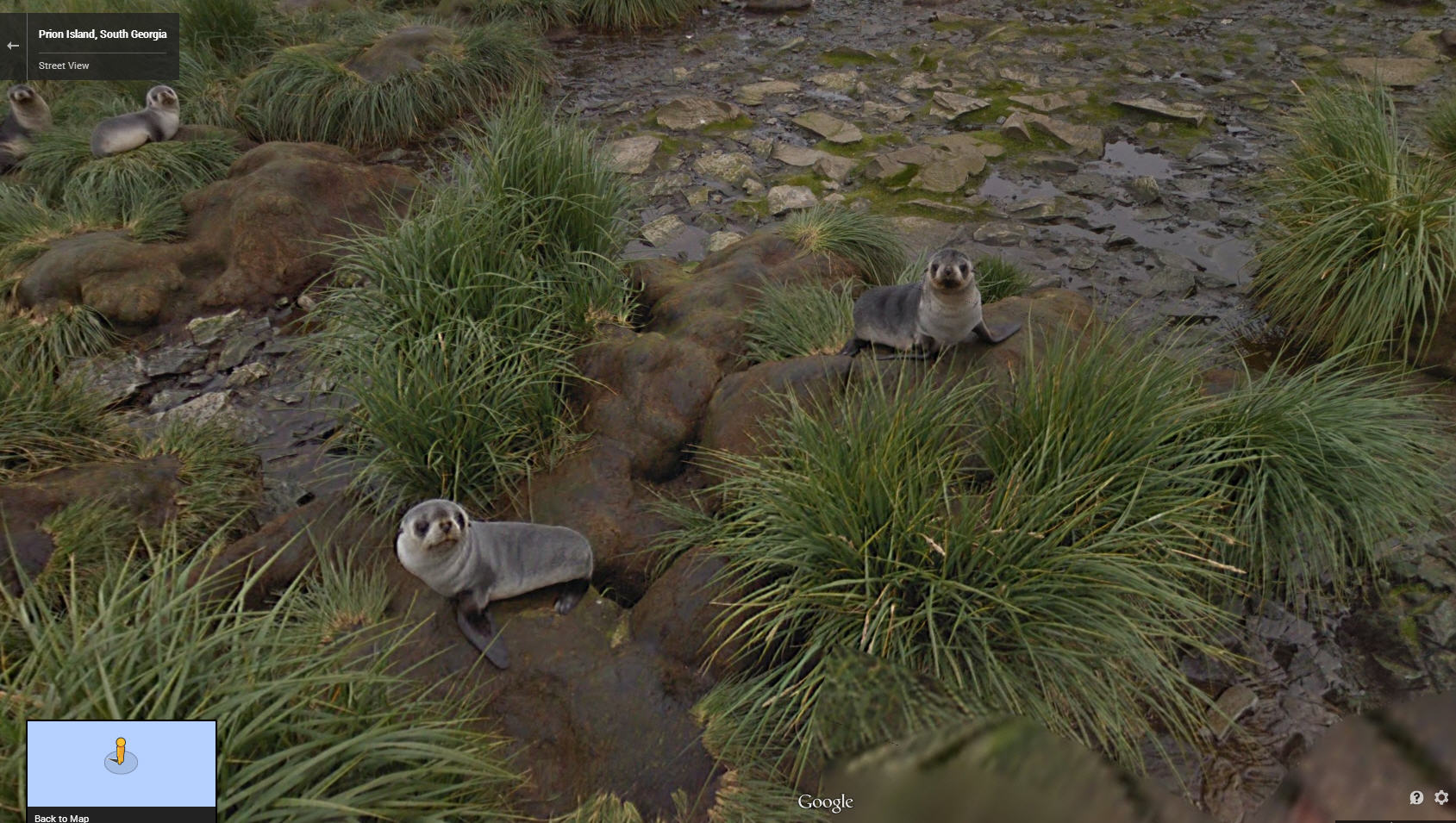 Hi there – Happy Seals on the Falkland Islands