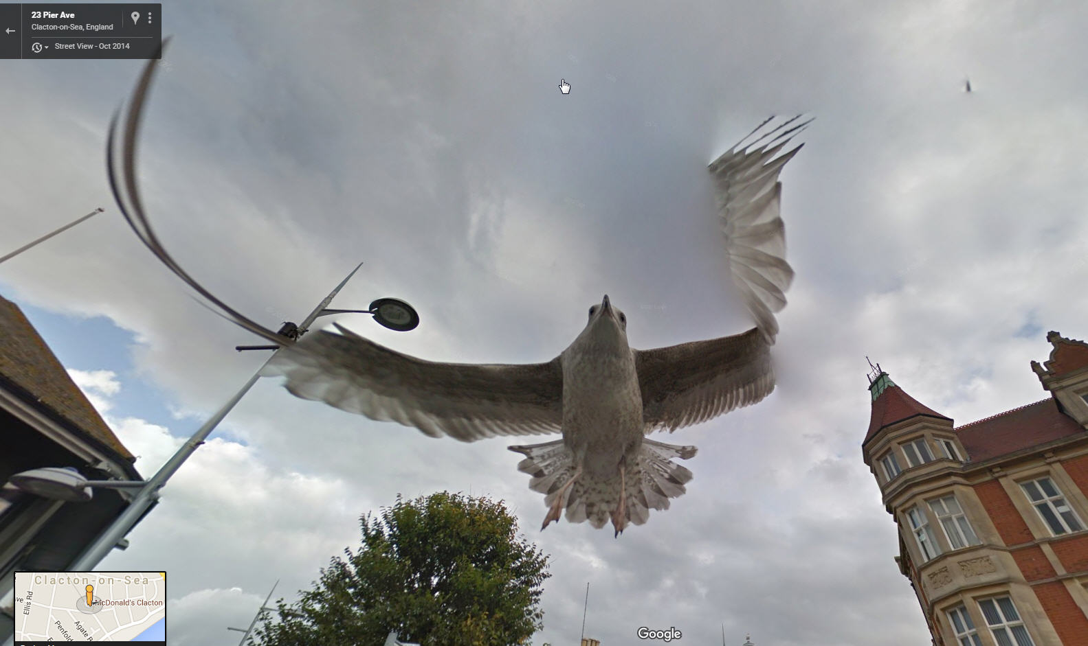 Watch out – Seagull Dive Bombing the Google Street View Car