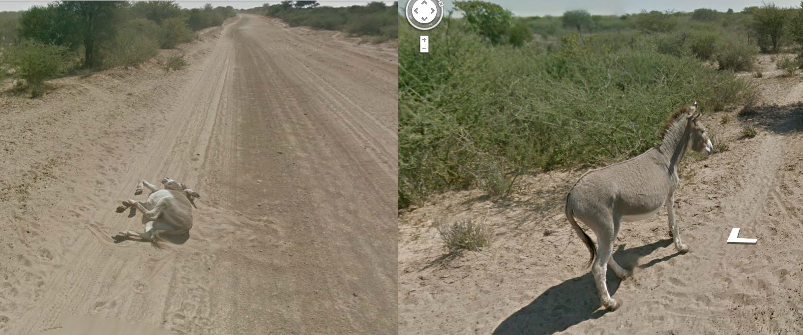 Did Google Street View run over a donkey in the Botswana desert?