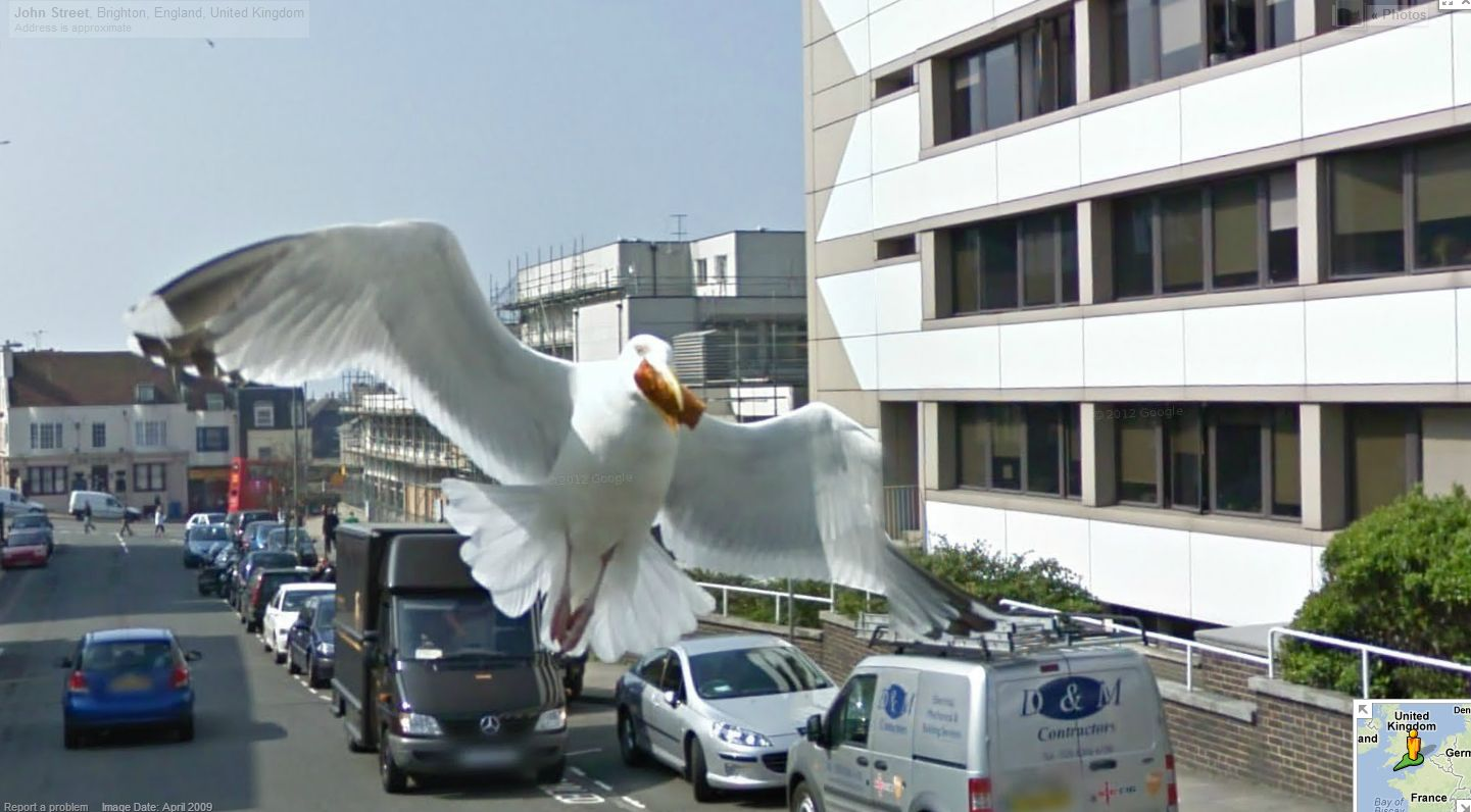 Seagull Photobombs Google Street View Camera