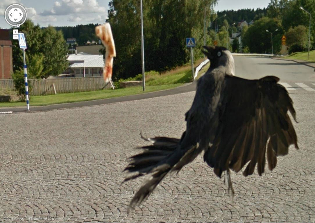 Holy Crow! Amazing Pizza Eating Crow Caught by Google Street View
