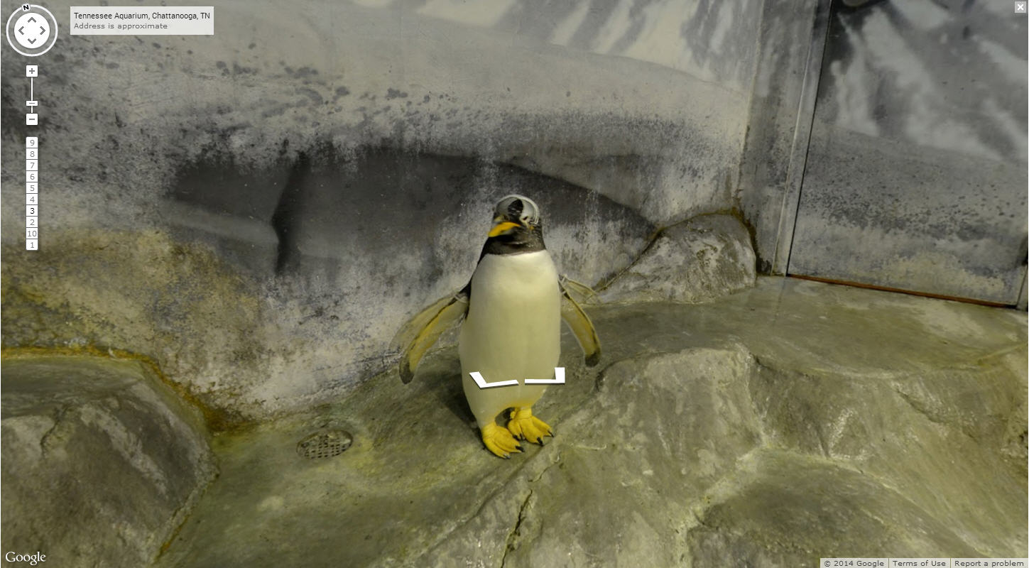 Penguins Visit Google Street View Once Again