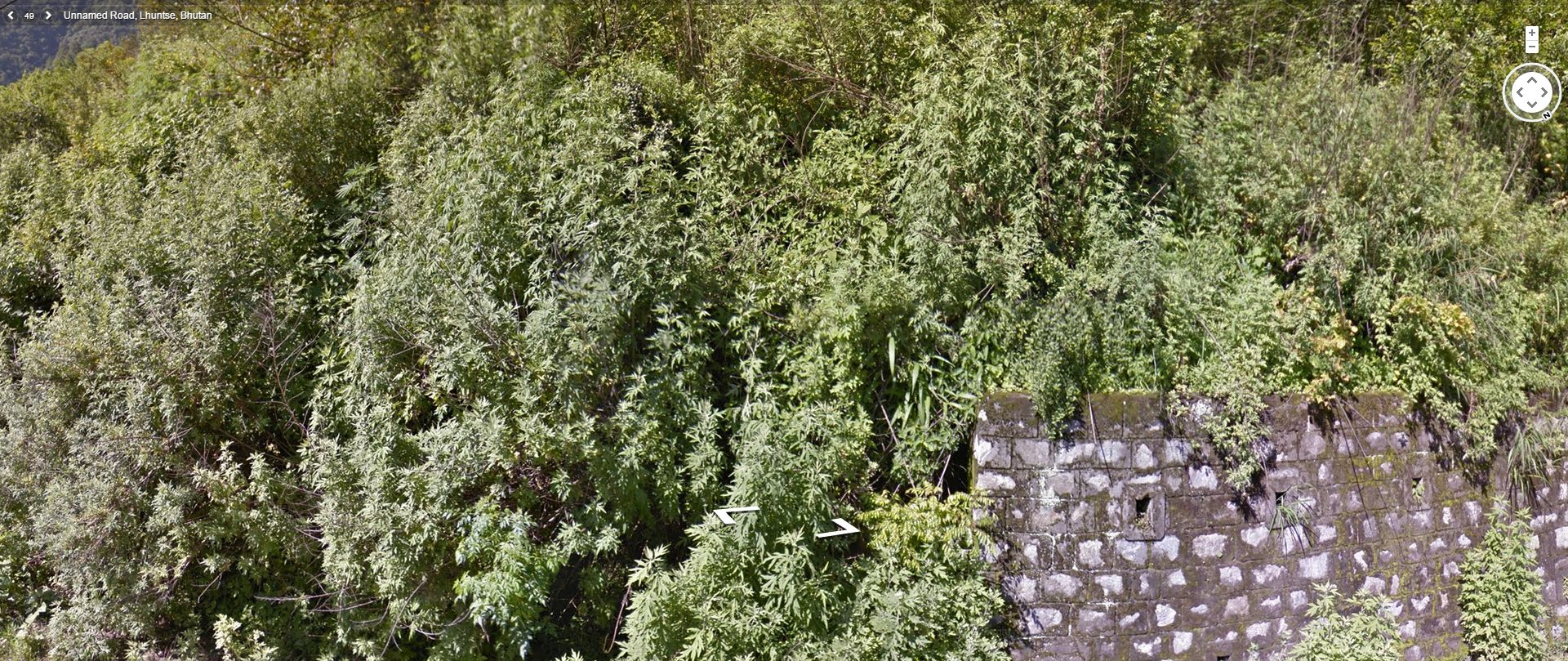In Bhutan, marijuana grows in the wild and is more common than regular grass!