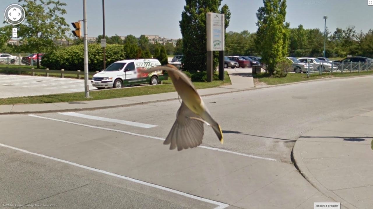Google Bird View….