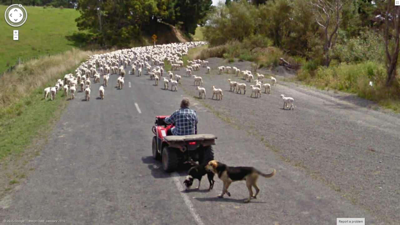 Now that's a lotta sheep.