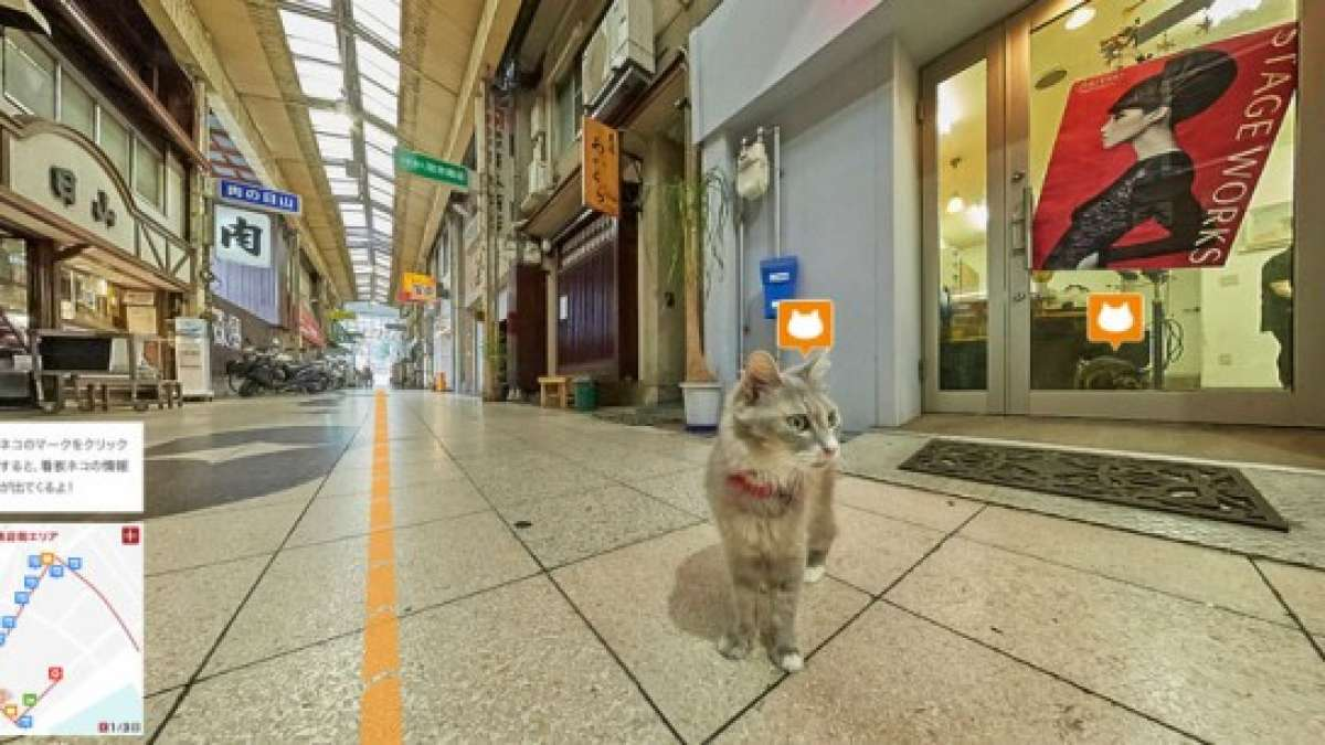 Japan has created a Google Street View just for cats – Google Cat View